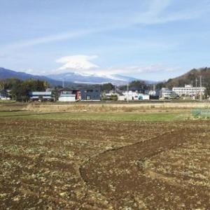 発芽玄米と敵意