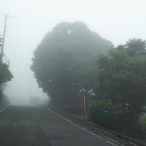 霧の中でみつける