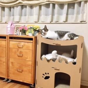 ネコ暮らし