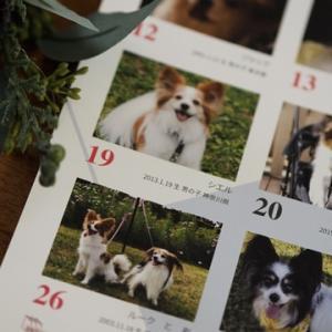 パピヨン 365カレンダーが届きました