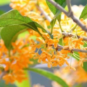 季節を切り取る アロマセラピー(12)