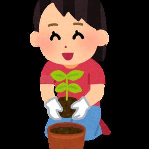 新しく仲間入りした植物を紹介します