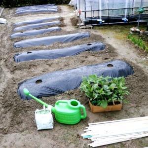 夏野菜苗定植