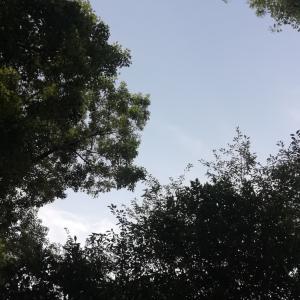 夏休みレポ3 リベンジファミリーキャンプ 開門山麓ふれあい公園編