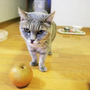 近所の人から梨を貰いました