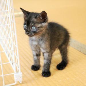 子猫の成長が早過ぎる