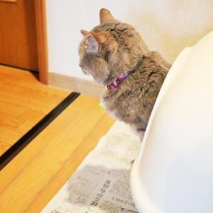 猫のピノちゃんのおトイレ事情
