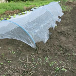 雨予報なので庭畑C204で家庭菜園してきまふたお♪