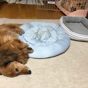 ベッド オンパレードのはなし