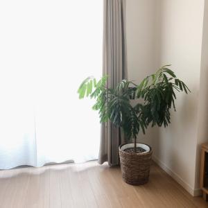 【グリーン】初心者さんにも育てやすい観葉植物4選