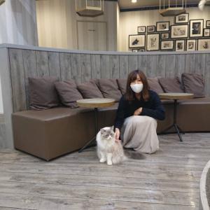 【日々】癒し度ナンバー1スポット!猫カフェMOCHA