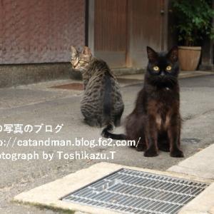 猫対策の音響兵器…