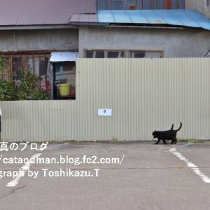 釧路の街角の猫