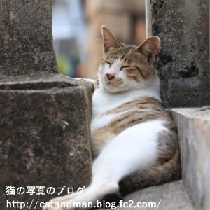 猫は狭い所が好き