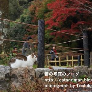 京都に紅葉の秋きたる