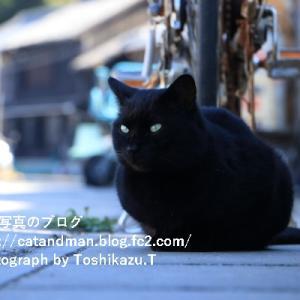 島の住人『わしは猫が大嫌いじゃ』