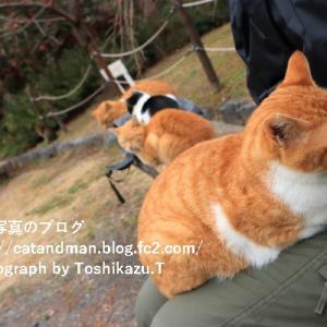 人の少ない京都の公園で出会った猫と人