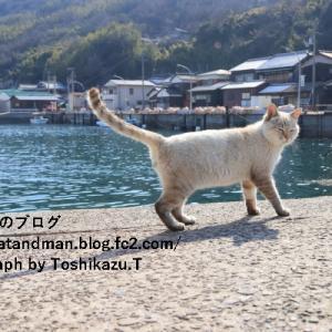 昼下がりの佐柳島の港を闊歩する猫様