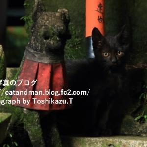 京都の古い神社の黒子猫