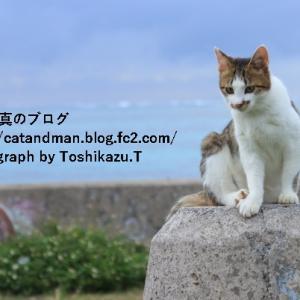 遥かなる沖縄の地の猫
