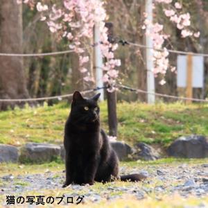 春の日の黒猫ちゃん