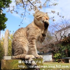 春の日の猫は平和そうですが…