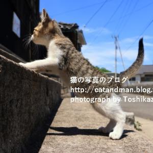 離島の猫はどうなっているのか…