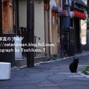 人絶えた路地の猫