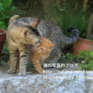 今シーズン初遭遇の子猫とその親猫