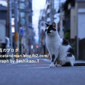 碁盤の目の中の猫