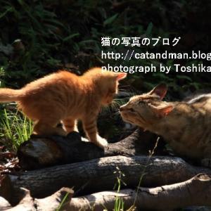 今日の猫親子、そして京都市内は