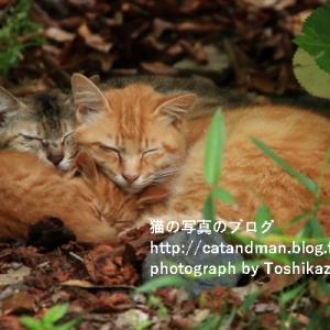 木陰で眠る猫の一家