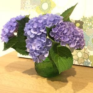 紫陽花をFruttaに飾る。