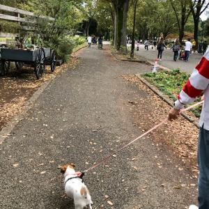 駒沢公園 ワンコ祭り