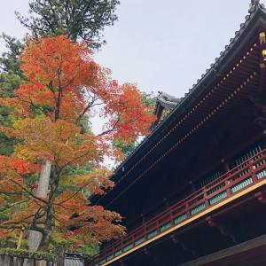 【入荷情報!街あるき館】世界遺産「日光の社寺」!神橋から輪王寺へぶらり散策
