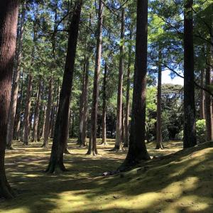 【入荷情報!街あるき館】城ぶら「飫肥城」!島津・伊東の因縁を鎮める飫肥杉の木立