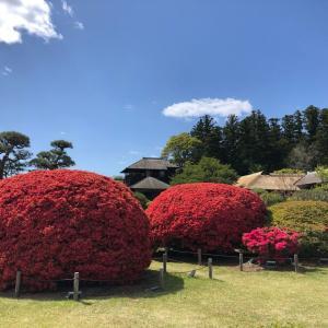 【夢中図書館】日本三名園の一つ、水戸「偕楽園」!四季をともに楽しむ名園