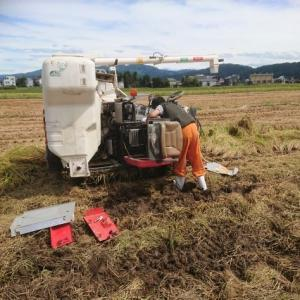 稲刈り7日目、進捗率40%