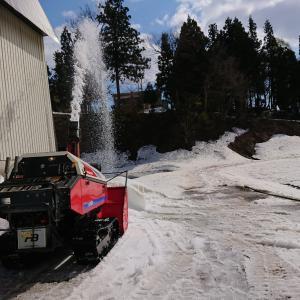 今日も除雪作業 棚田の残雪は0.7m
