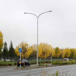 帯広の街路樹 すっかり秋