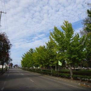 穏やかな天候の中 市民サイクリングで交流しました