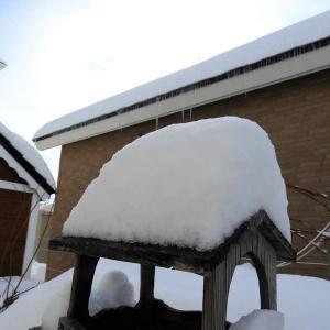 雪開けの朝 日中5℃の予感