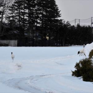 北海道非常事態宣言 (コロナウィルス感染)