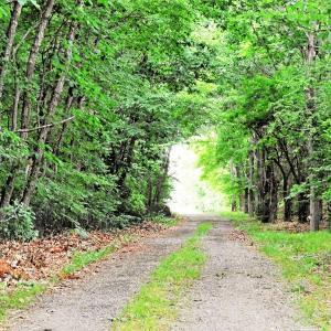 配達寄り道 3 林の回廊あたり