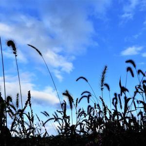 秋を感じながら 畑も婚姻色?