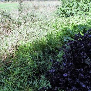 アジト草刈り
