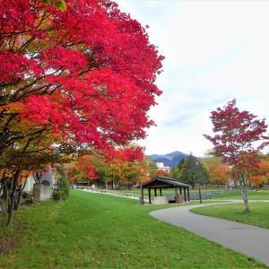 糠平温泉郷 紅葉が盛りでした!
