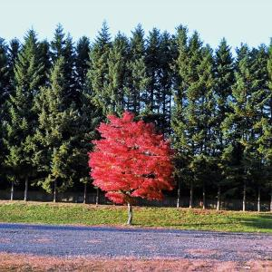 秋を感じながらテリトリー散歩