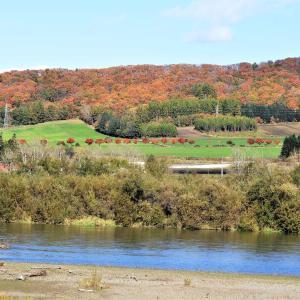 サイクリングロードのカエデ並木の紅葉 綺麗でした!!