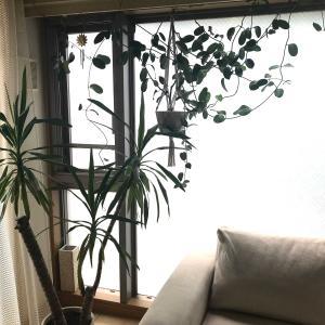 部屋と植物の相性
